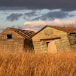Royalty-Free Stock Photo: Deliapidated  farm granaries in scenic Saskatchewan