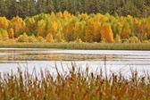 Saskatchewan lake in fall — Stock Photo