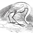 Engraving of a White Heron or egret (Ardea egretta) — Image vectorielle
