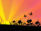 Butterflys And Flowers At Sunset — Stock Photo