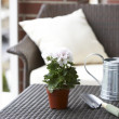 Potted plant, shovel and watering can on tabletop - Stock Photo