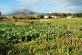 Small farm — Stock Photo