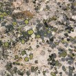 Granite rock texture green lichen - Stock Photo