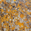 Granite rock texture yellow lichen - Stock Photo