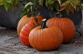 Pumpkins in the garden — Stock Photo