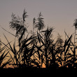 Grasses in the sky — Stock Photo