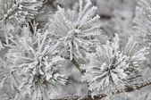 Winter wildflowers — Stock Photo