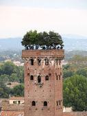 Guinigi tower in Lucca — Stock Photo