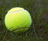Tennis Ball on Natural Grass — Stock Photo