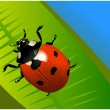 The colored ladybird on the leaf — Stock Vector