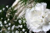 Beyaz çiçek — Stok fotoğraf