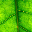 Green leaf - Stockfoto