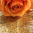 Orange rose — Stock Photo #4817004
