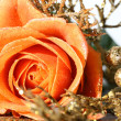 Orange rose — Stock Photo #4817016