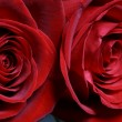 Red roses — Stock Photo #4937954