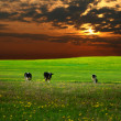 Stock Photo: Cow landscape