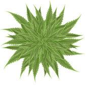 大麻 — 图库照片