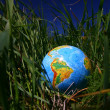 Globe in grass - Stock fotografie