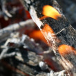 Charcoals fire — Stock Photo
