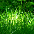 Green grass - Foto Stock