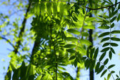 Incredible green leaf foliage — Stockfoto