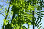 Unglaubliche grünes blatt laub — Stockfoto