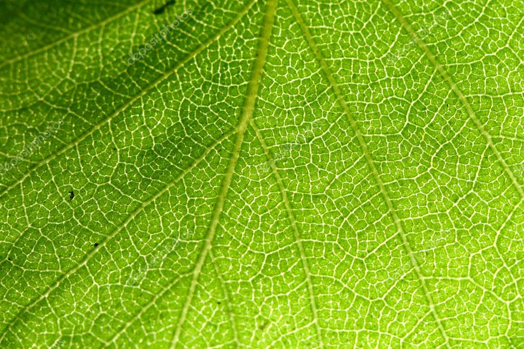 Green leaf beautiful nature background — Stock Photo #5242128