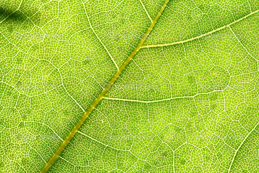 Green leaf beautiful nature background — Stock Photo #5242142