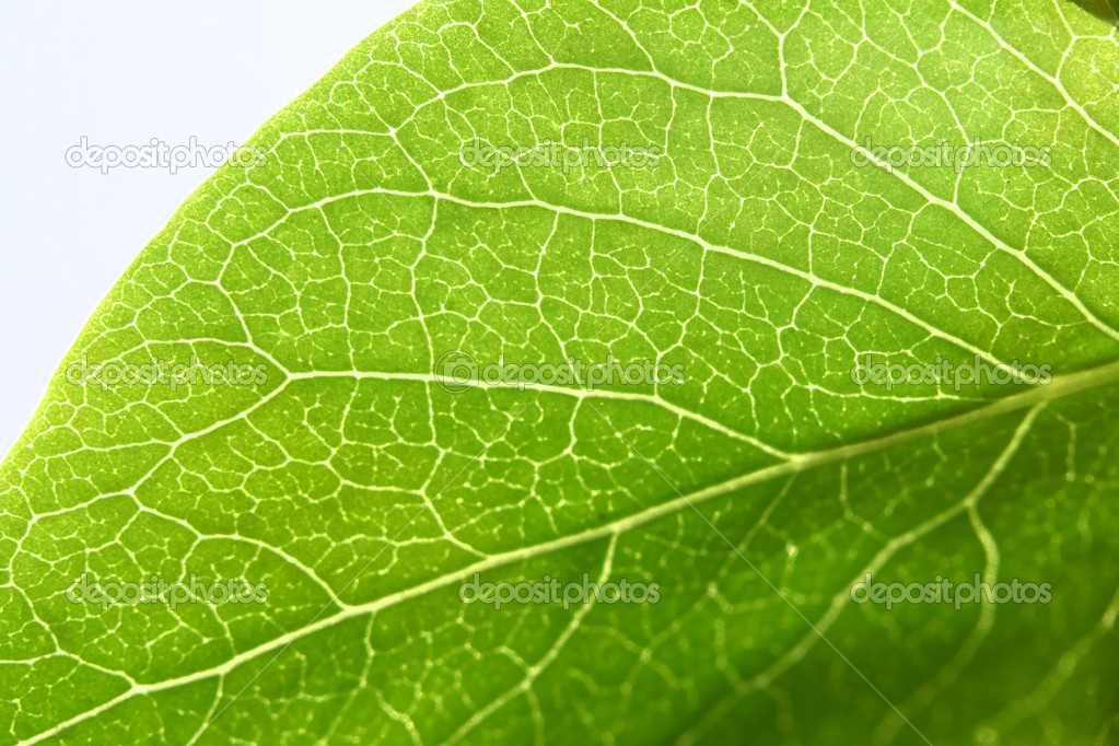 Green leaf beautiful nature background — Stock Photo #5242148