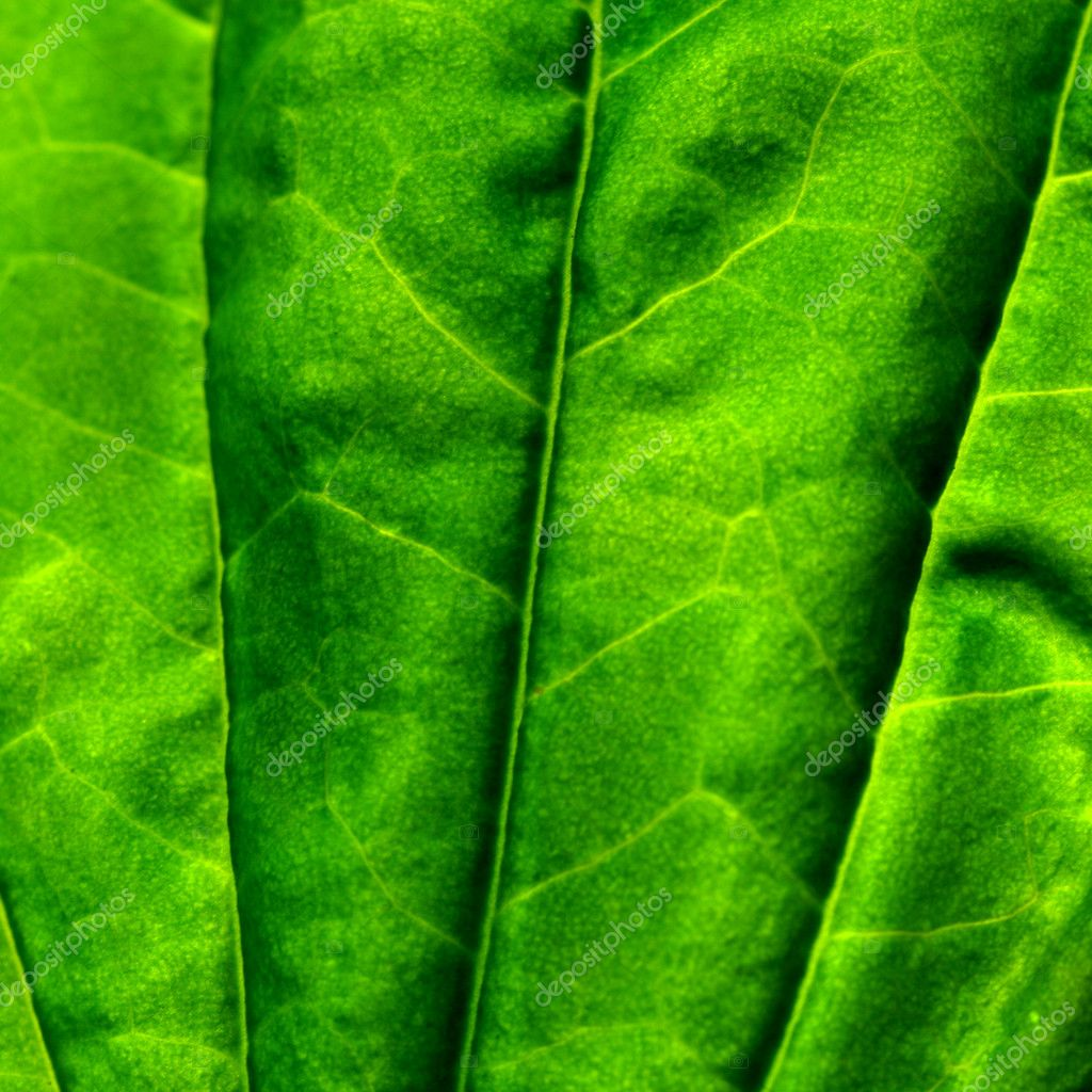 Green leaf macro close up — Stock Photo #5242156