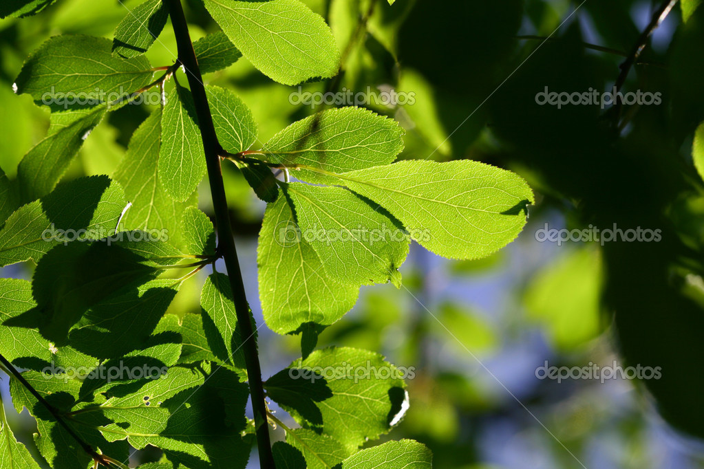 Green leaf beautiful nature background  Stock Photo #5242243