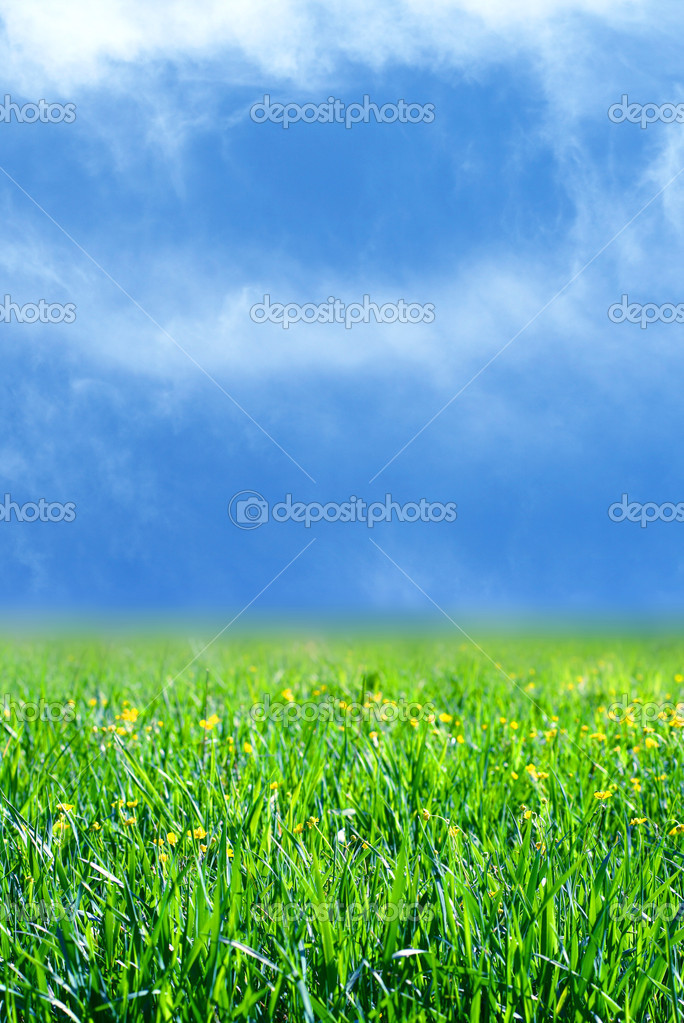 Green grass field nature background — Stock Photo #5242251