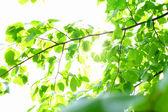 Feuillage feuille verte incroyable — Photo