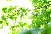 Incredible green leaf foliage — ストック写真