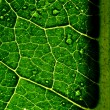 Green leaf — Stock Photo #5276211