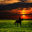 Rider Silhouette on Horseback - Stock Photo
