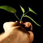 Hand plant — Stock Photo #5302427