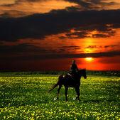 Rider Silhouette on Horseback — Stock Photo
