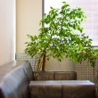 Stock Photo: Brown leather sofa, window shutters and a green plant in the cor