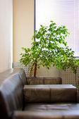 Brown leather sofa, window shutters and a green plant in the cor — Stock Photo