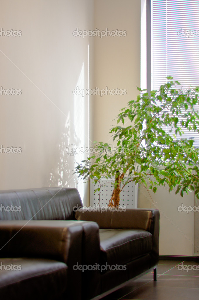Brown leather sofa, window shutters and a green plant in the corner office — Stock Photo #5351584