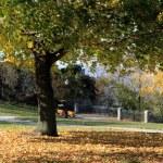 Fall trees. — Stock Photo