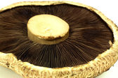 Portabella Mushroom back close up macro. — Stock Photo