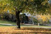 Falla träd. — Stockfoto