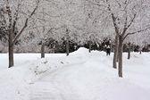 Dark winter day — Stock Photo