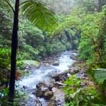 Jungle river — Stock Photo