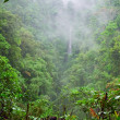 Mountain jungle — Stock Photo