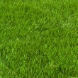 Neatly cut grass — Stock Photo #4756581