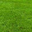 Neatly cut grass — Stock Photo