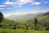 Mountain meadows — Stock Photo